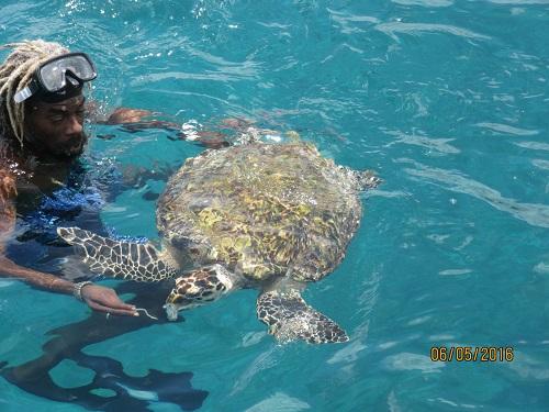 Cool Runnings Snorkel Cruise
