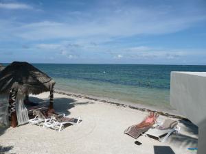 Normal seaweed in the Riviera Maya